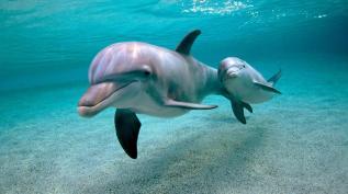 Вся Правда О... Дельфинах с Владимиром Клишиным