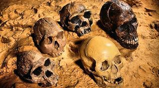 Открытия антропологии | Что нового у предков?